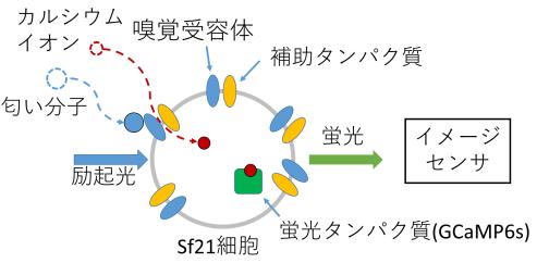 reserch_yokoshiki_1.png